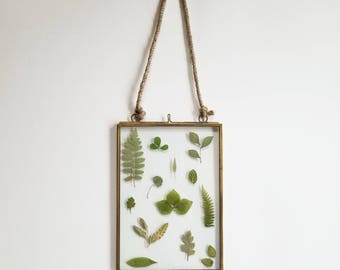 Framed Botanical Pressing