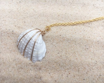 Sea shell, white, chain, gold, wire wrapped, chain
