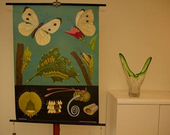 Pull down School Chart  Butterfly  by  Jung Koch Quentell