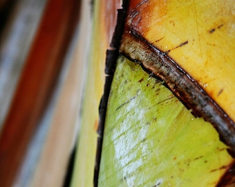 "Nature Photography ""Abstract Palm 1"" Tree Affordable Print. Colorful and Bright. 8x10, 11x14, 16x20, 20x24, 24x30, 24x36, 30x40"