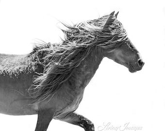 Sable Island Stallion Moves - Fine Art Horse Photograph - Horse - Sable Island - Wild Horse - Black and White -Fine Art Print