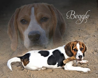 Fleece Blanket Beagle Soft Blanket