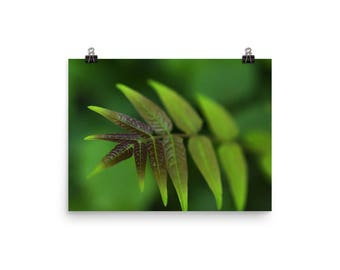 green leaf print | nature photography | wall decor