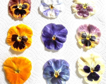 Giant, CRYSTALLIZED, EDIBLE, PANSIES, Gift, Purples, Blues, Yellows, Burgundy, Mixed Colors, Large, Cake Decorations, 8 large