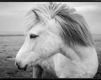 Horse Print, Horse Photo, Pony Print, Horse Wall Art, Horse Printable Art, Printable Wall Art, Horse Art Print, Black and White, Horse Art