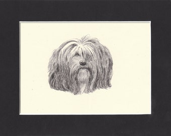 Lhasa Apso Vintage Toy Dog Print C.Francis Wardle 1935 Lhasa Apso Drawing Print with Mat Lhasa Apso Print