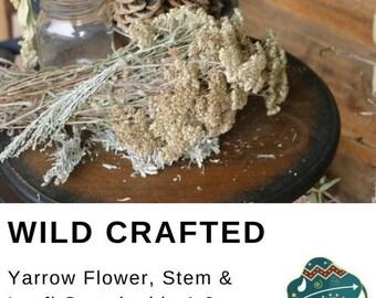 Yarrow leaf, stem and flower