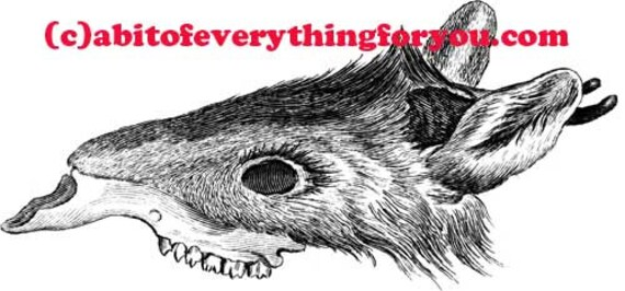 mouse rat creature skull skeleton printable animal art print clipart png download digital vintage image graphics fantasy beasts