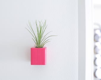 Pink Air Plant Magnets, Mothers Day Gifts, Colorful Fridge Magnet, Girlfriend Gift, Kitchen Magnet, Cute Fridge Magnets, Refrigerator Magnet