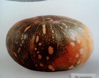 Caribbean Pumpkin Cucurbita moshata Calabaza 25 seeds