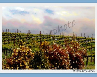 Landscape Photography-Vineyard and Roses