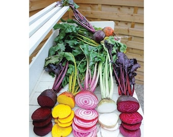 Rainbow Mix Beet (25 thru 4oz seeds) Grow Detroit Red Chioggia Gold White! 316
