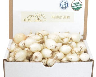 White Onion Sets Organic | Onion Bulbs White Ebenezer Onion 1 Pound Non-GMO SPRING SHIPPING