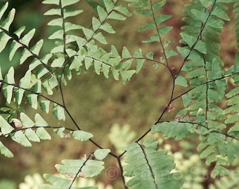 Heart-Shaped Ferns, Summer, Garden in the Woods, Color Photography