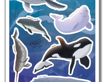 Whales sticker set - 6 illustrated stickers of different shark species