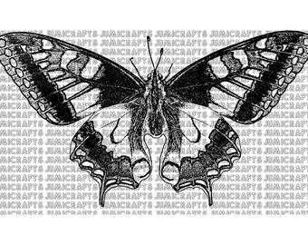 Butterfly Digital Stamp, Clip Art, Line Art
