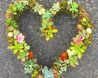 Living Succulent Wreath- Full Heart
