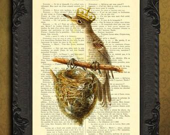 Bird with bird nest print birdhouse art bird building birdhouse illustration