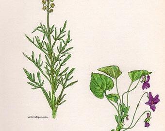 ANTIQUE BOTANICAL PRINT flowers and plants 36