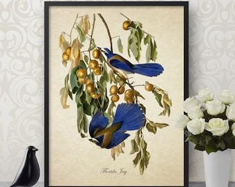 Antique Botanical Bird Print Florida Jay Giclee Vintage Natural History Bird Art Decorative Blue Jay Audubon Reproduction B004