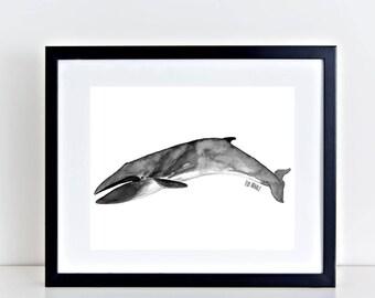 Watercolor Whale Print - Fin Whale