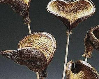 Dried Badam Nut Pod | Badam Nut Pods on Stems | Elephant Ear Pods | Natural Pods