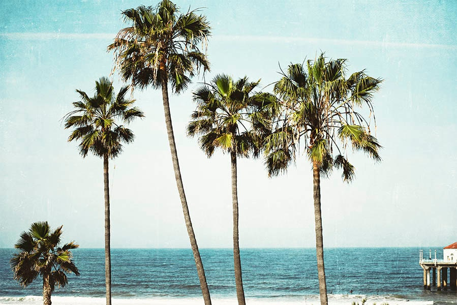 California Palm Tree Photograph Pacific Ocean Manhattan