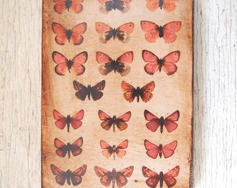 Butterflies Specimens Photo  F -Wall Art