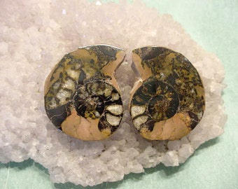 Fossil Ammonite cabs Matched Pair, Sliced Highly polished, Ready for jewelry making n more (R)
