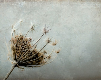 Queen Annes Lace Photography, Flower Photo, Nature, Large Wall Art, Blue and Brown, Nursery Wall Decor, Minimal, Grey, Flower Print
