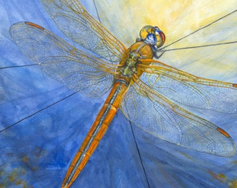 """Dragonfly, """"Here Comes the Sun,"""" giclée print of original acrylic painting"""