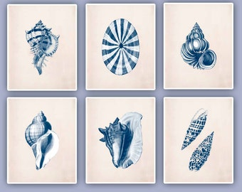 Seashells Prints, Sea Shells navy color prints, seashore shells, sea snail, Nautical Prints, cottage beach decor, coastal livisng SKUSS6