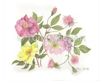 My Favourite Roses | Greeting Card | x3