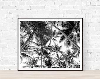 Coastal decor, Beach Print, Tropical Photography, Palm Tree,Port Douglas, Beach Photography, Black and white photo, Ocean photography