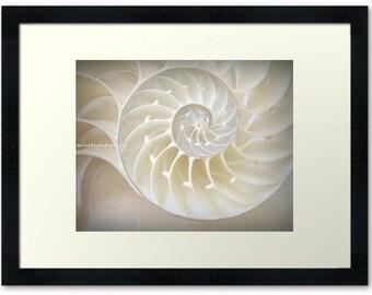Ocean Dreaming - Nautilus Shell Beach treasury Ocean is calling Beach bum Beach house decor Summer Fine Art Print 16x20 - Limited 5/50