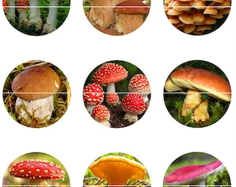 Mushroom Magnets Pins Party Favors Nature Refrigerator Magnets Cabochons
