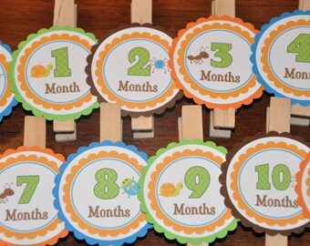 Bug Photo Clips. Insect. Photo Clips. Picture Banner. Set of 13. Newborn. 12 months. First Birthday. Choose boy or girl
