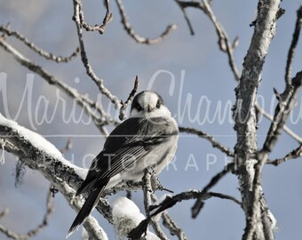 Lustrous greeting card blank 5 x 7: bird perched