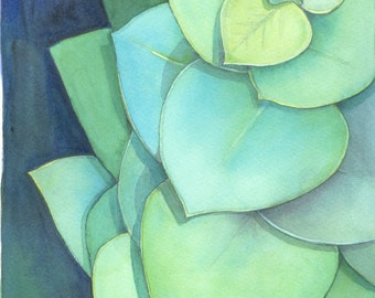Silver Dollar Gum, watercolour, painting, Australian, native, botanical, illustration