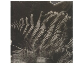 Fern, Photographic Print, Fine Art Giclée, Limited Edition.