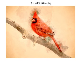 Watercolor Male Cardinal
