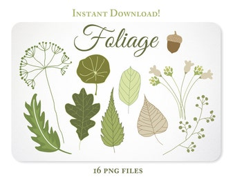 Hand Drawn Leaves, Foliage, and an Acorn Design Elements - Instant Download