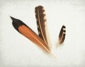 Nature Photography, Feather Photograph, Naturalist Wall Art, Fine Art Photography Print, Orange Flicker Feathers Print