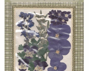On Sale - PRESSED FLOWERS Greens - Everlasting BOTANICALS -  Mixed lot of Purple Pansies and Other Flowers