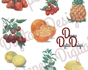 Digital Vintage Food Illustration Fruit & Mint Clip Art - Print at Home Decor - INSTANT DOWNLOAD
