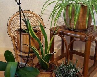 Cache-pots pour plantes en rotin