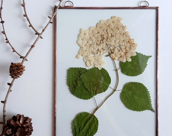 Pressed flowers suspended between glass Pressed plants Pressed hydrangea frame Double sided glass frame Dried flowers Gift for nature lovers