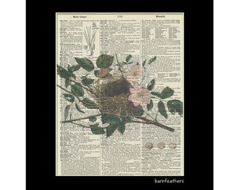 Vintage Illustration Sparrows Nest Dictionary Art Print Book Page Art No.P6