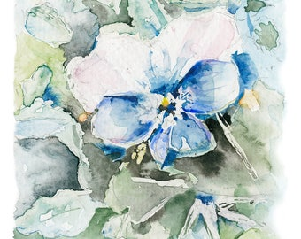Blue Pansy Giclee Watercolor Print 11.5 inches x 8.5 inches