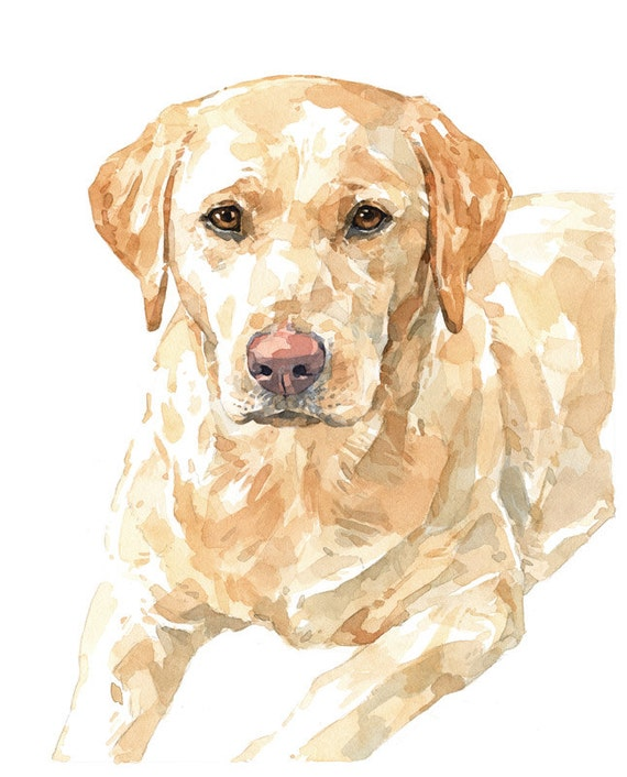 Yellow Lab Watercolor Limited Edition Print labrador